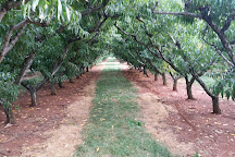 Chiles Peach Orchard, Crozet, United States