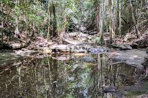 Buderim Forest Park, Buderim, Australia