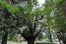 World's Largest Sassafras Tree, Owensboro, United States