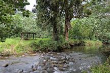 Keahua Arboretum, Kauai, United States
