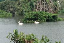 Vedanthangal Bird Sanctuary, Kanchipuram, India