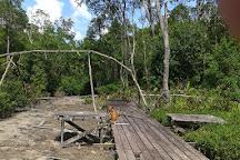 Labuk Bay Proboscis Monkey Sanctuary, Sandakan, Malaysia