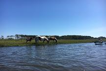 Coastal Kayak, Fenwick Island, United States