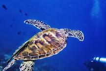 Anda Scuba Diving, Anda, Philippines