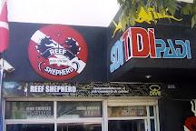 Reef Shepherd, Santa Marta, Colombia