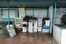 Honey Bees Centre, Saputara, India
