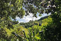 Tiritiri Matangi Island, Auckland, New Zealand