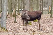 Wildpark an den Eichen, Schweinfurt, Germany