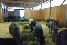 Turtle Valley Donkey Refuge, Chase, Canada