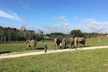 Knysna Elephant Park, Knysna, South Africa