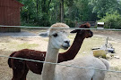 Little Brushwood Alpaca Farm