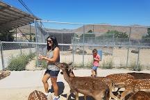 Sierra Safari Zoo, Reno, United States
