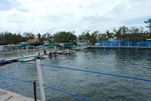 Dolphins Plus Marine Mammal Responder, Key Largo, United States