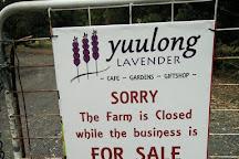Yuulong Lavender Estate, Mount Egerton, Australia