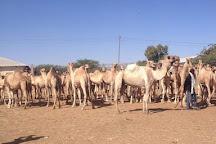 Livestock Market, Hargeysa, Somalia