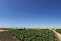 Barel Vineyards, Tekirdag, Turkey