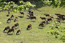 Wildpark Ernstbrunn, Ernstbrunn, Austria
