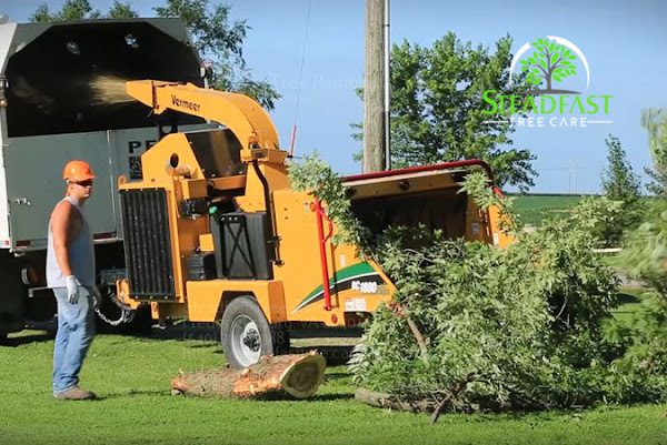 Steadfast Tree Care Fredericksburg cleaning up after a tree trimming job
