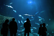 L'Aquashow, Audierne, France