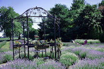 Serenity Lavender Farm, Harrow, Canada