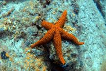 Dive Pro Fuerte, Costa Calma, Spain