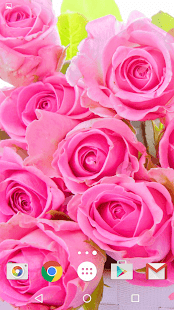Růžových Růží Živé Tapety - náhled