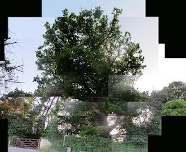 Photo: Tree @ Combe Lodge (early morning)