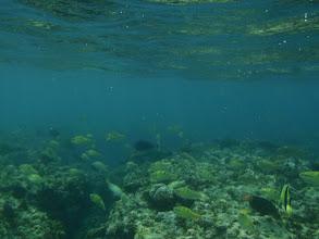 Photo: Parrotfish, Siquijor Island, Philippines