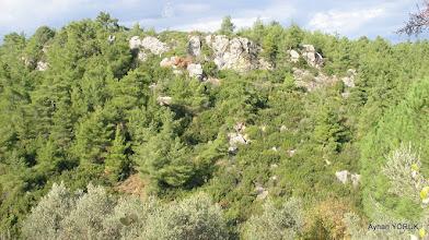 Photo: Kaplan Kayası - Çile Köyü - 50-60 Yıl önce buralarda kaplan yaşarmış. EFES-MİMAS (İYON) YOLU 4. Etabı - ALTARNATİF ROTA - 29.11.2015  (ÇİLE-AHMETBEYLİ-CLAROS Arası)