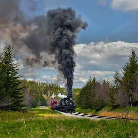 Up the Hill by Chuck  Gordon  - Transportation Trains ( railroad, steam train, rail, forest, smoke )
