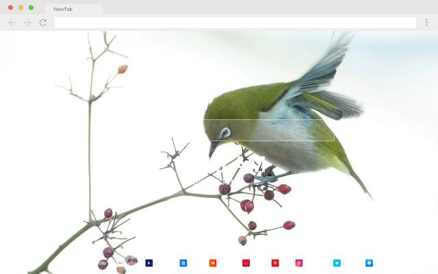 Passerine Popular HD Birds New Tabs Theme