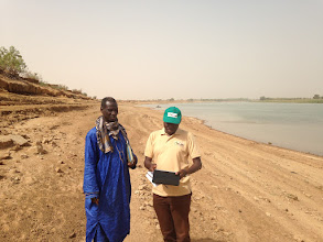 Photo: Photo from Matam, in northern Senegal along the Senegal River (across from Mauritania), where a large project, PRODAM, is training farmers to scale up SRI to 3,000 ha.  [Photo by Devon Jenkins, Senegal, 2015]