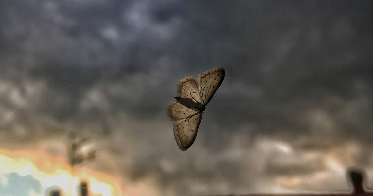 Battito d'ali di melissagasperini