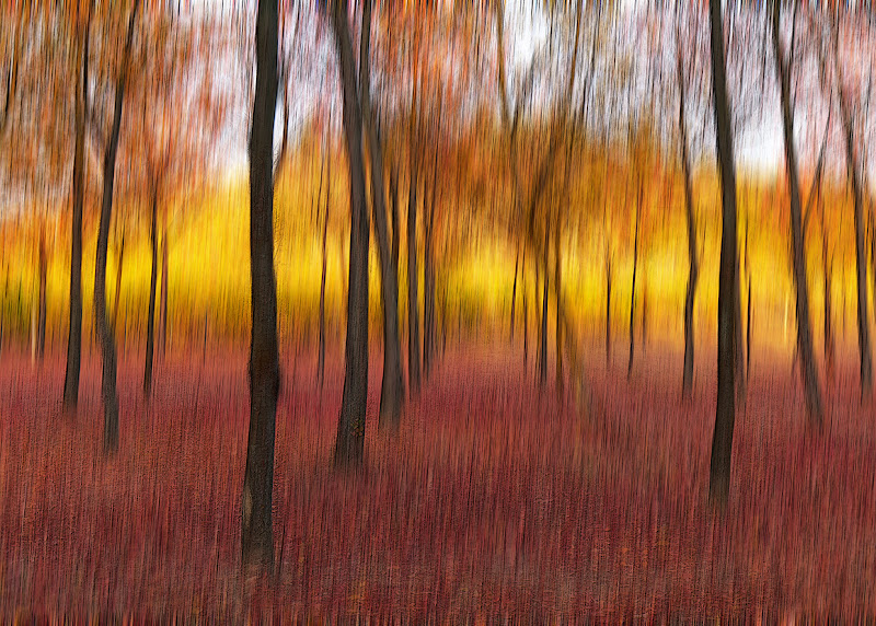 I caldi colori autunnali di Marlak