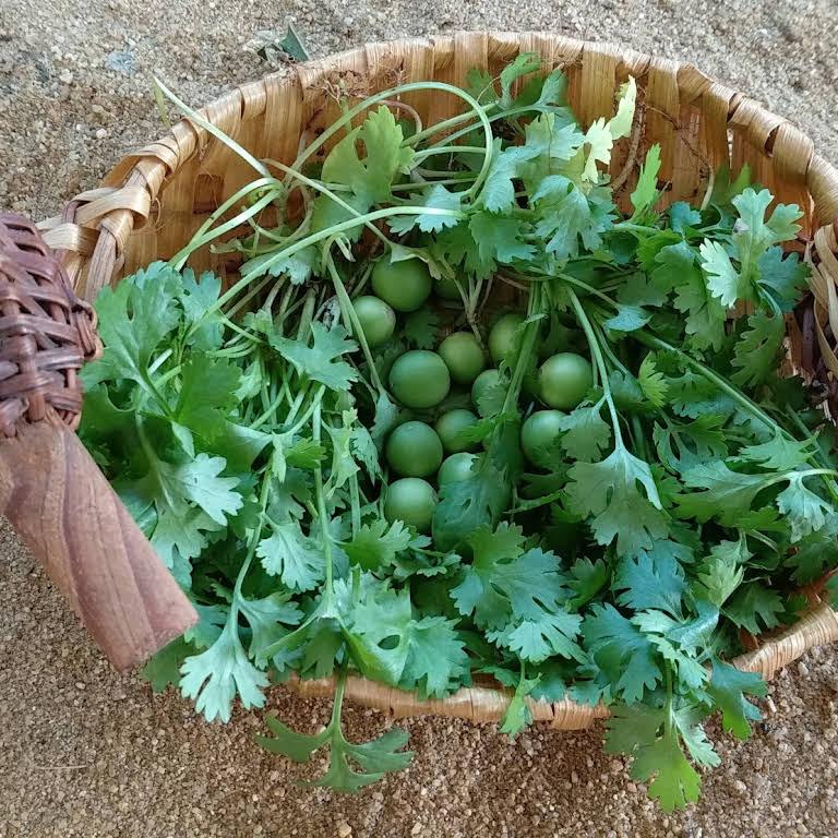 Indra Terrace Gardening Garden Center In Chennai