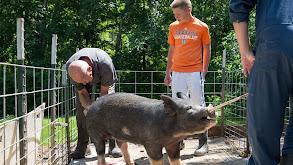 My Fair Piggy thumbnail