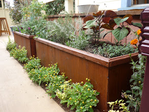 Photo: Planter boxes of cocktail-friendly plants, including shiso, rosemary, thyme, and lavender