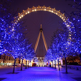 London Eye by Howard Ferrier - City,  Street & Park  Night ( illuminated, london eye, wheel, london, purple, path, trees, night, ferris wheel, fairground, funfair, , Urban, City, Lifestyle )