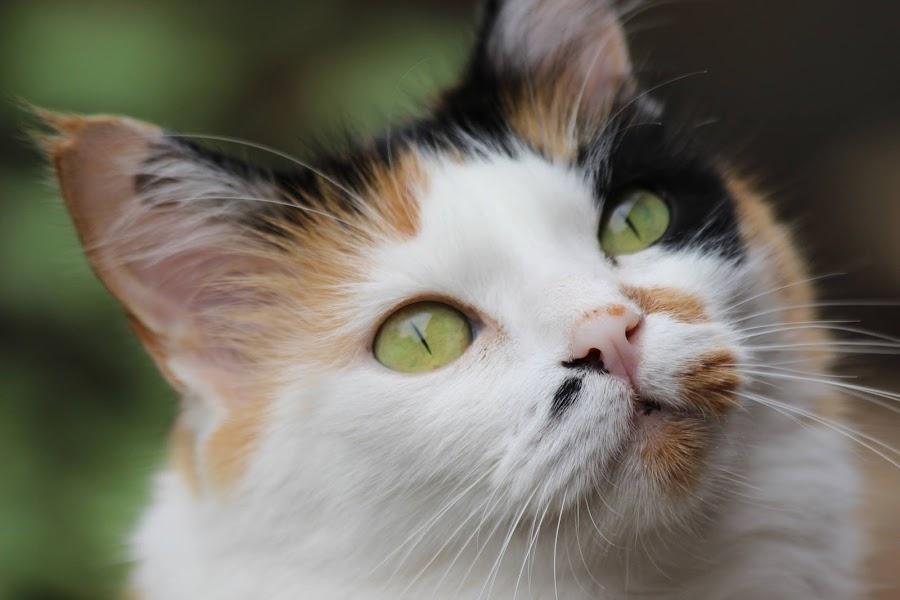 by Lené Botha - Animals - Cats Portraits (  )