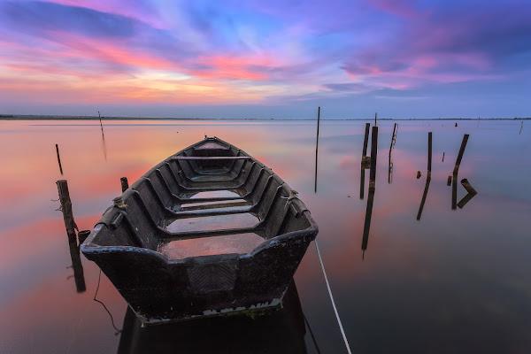Le meraviglie del lago di Lesina... di prometeo