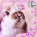 Pink Bunny HD icon