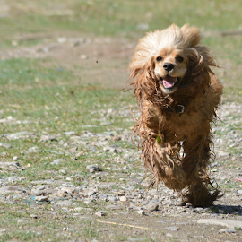 The Best Friend by Ajay Singh - Animals - Dogs Running ( running, nature, animal, riverside, dog )