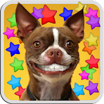 DOG SMILES LIVE WALLPAPER Icon