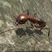 Ant Simulation 3D - Insect Survival Game icon
