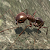 Ant Simulation 3D - Insect Survival Game file APK for Gaming PC/PS3/PS4 Smart TV