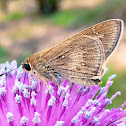 Skipper (butterfly)