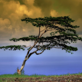 ~hawaiian tree~ by Kirk Kimble - Landscapes Forests