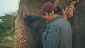 Operation: Elephant thumbnail