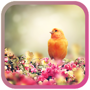 Birds Spring live wallpaper