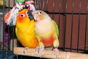 parrot-with-companion-01-300x199.jpg